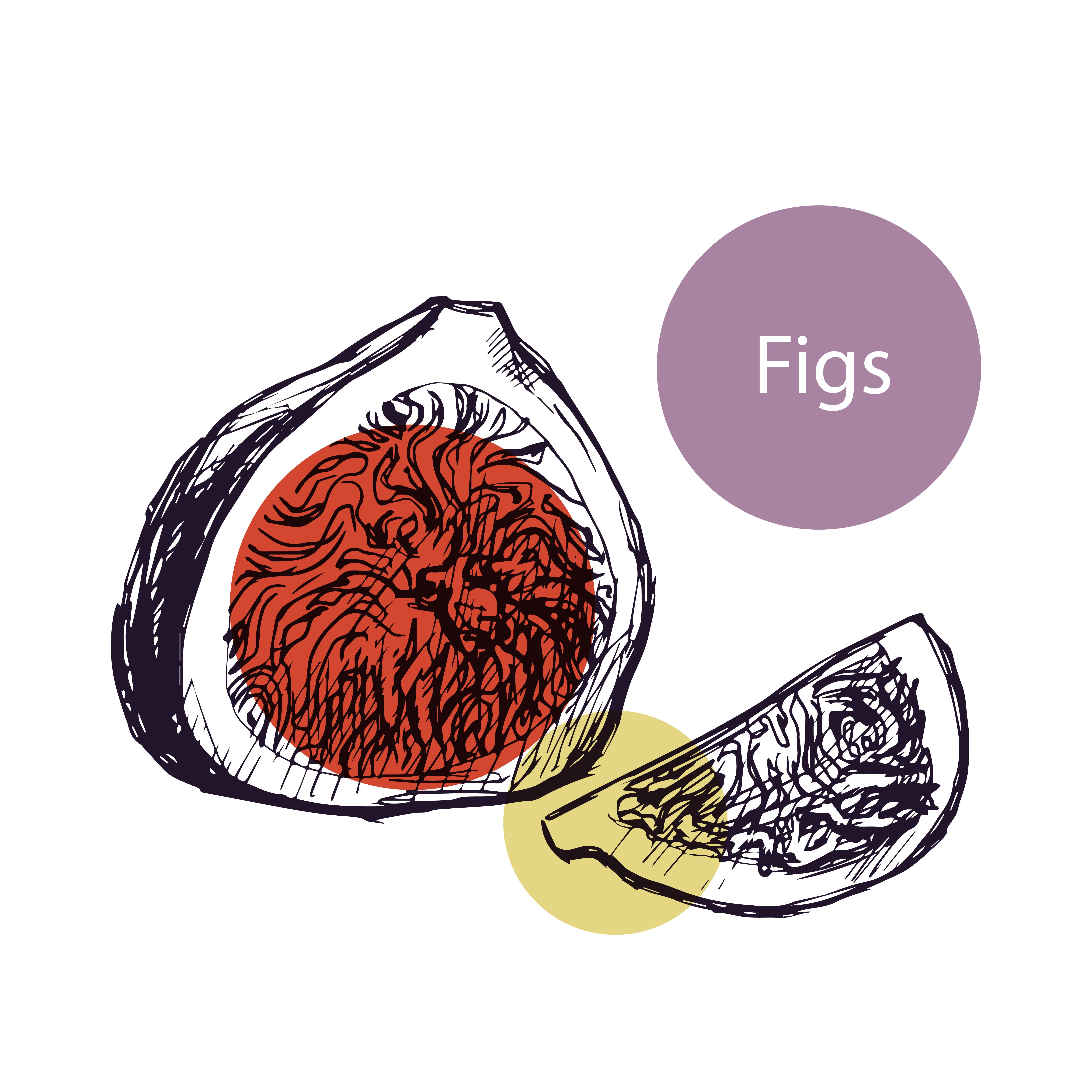 figs whole and half graphic illustration with colorful spots of purple brown yellow