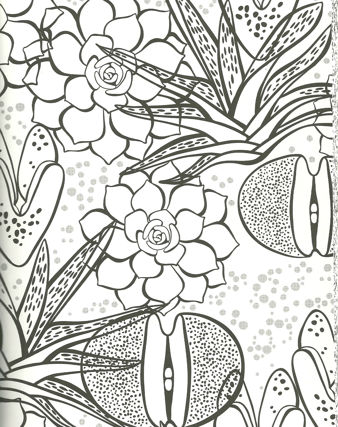 Succulent Coloring Page Rock Plant Zebra Plant Aloe And