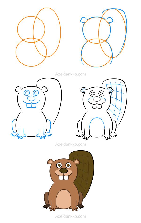 How to draw a beaver comment dessiner un castor - Dessiner une marmotte ...
