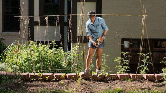 Promote a Healthy Bean Garden with a DIY Trellis