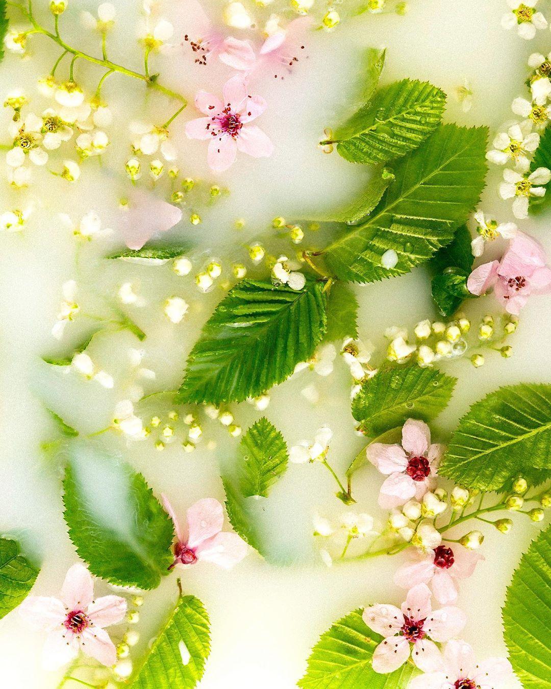 Фриланс цветы найти работу фрилансера дизайнера