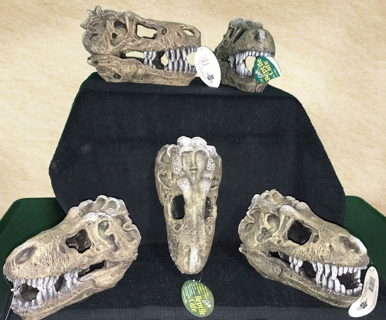 Large Terrarium Decoration T Rex Skull In Pet Supplies Small Animal Supplies Other Small Animal Supplies Ebay Large Terrarium Terrarium Skull