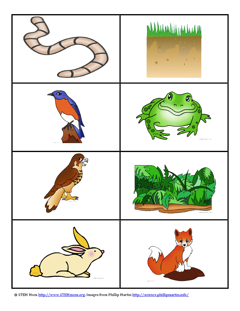 Stemmom Foodweb Pdf Google Drive Food Chain Middle School Science Food Chain Activities [ 1035 x 800 Pixel ]