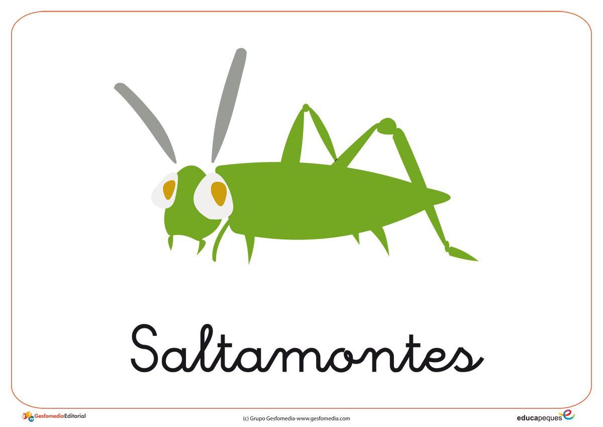 Fichas de animales descubre estas fichas de insectos para - Como ahuyentar los mosquitos ...