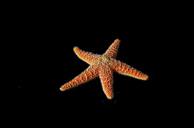 Free Image On Pixabay Starfish Spur Sea Prickly Jellyfish Images Starfish Sea Animals