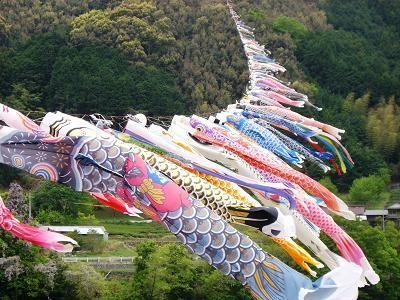 四万十川の鯉のぼり : ピピ日和