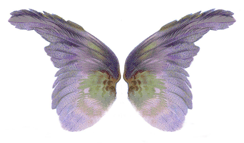 [Wings_Purple_blogsz10inch.jpg]