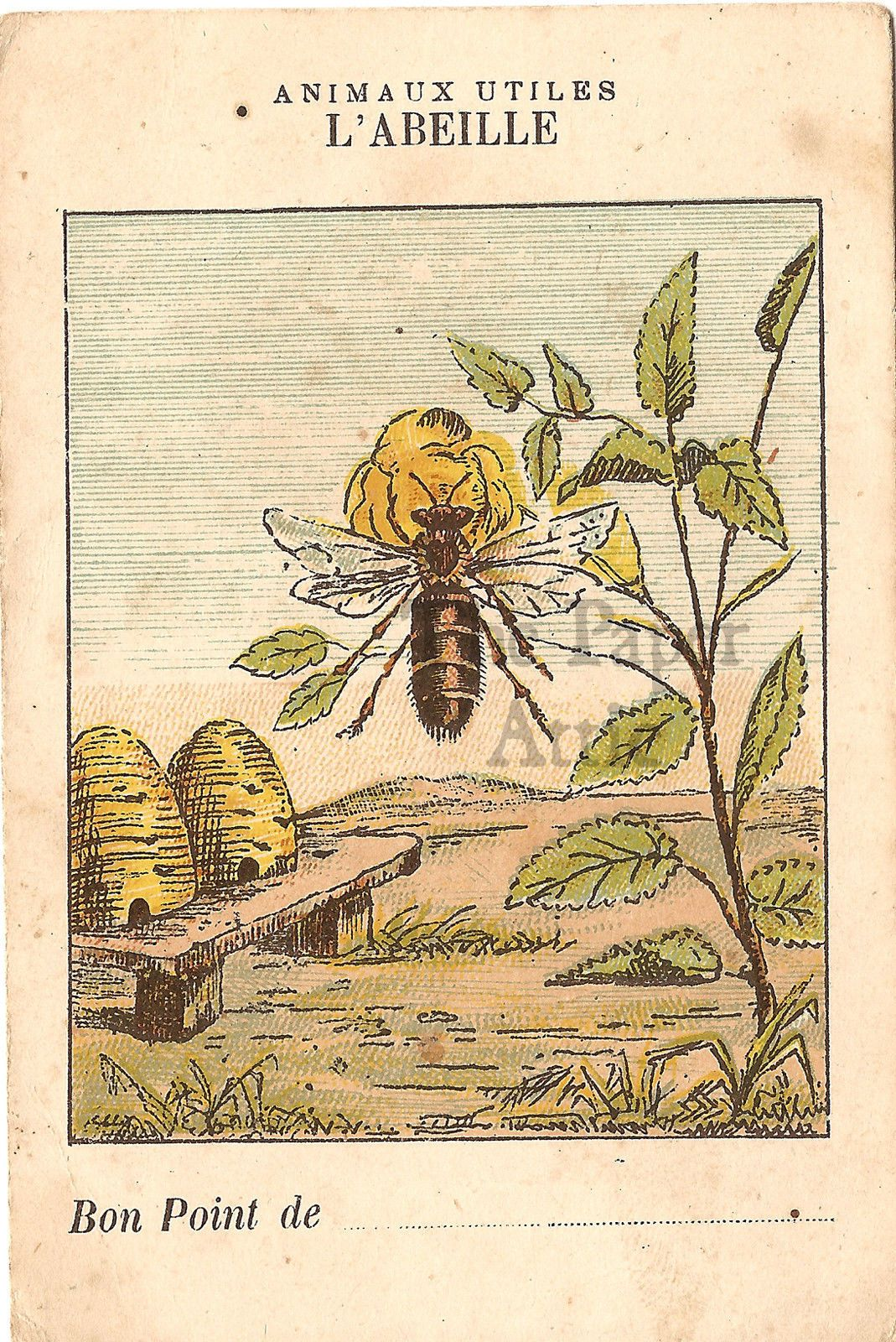 Bee Beehives Antique French Natural History Chromo Card | eBay ...