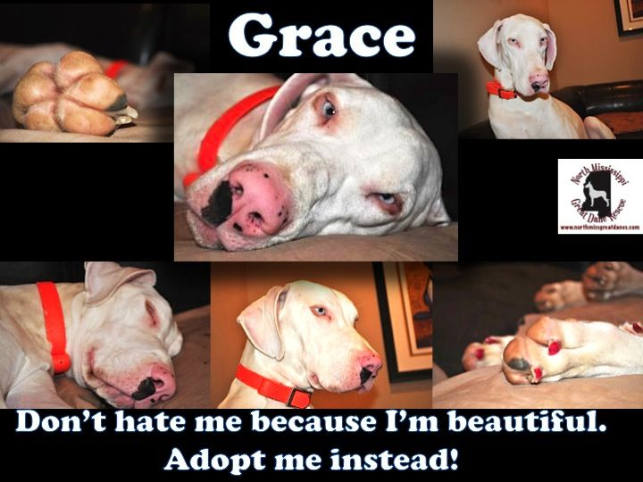 Grace Is An Adoptable And Gorgeous Deaf And White 1 Year Old Great