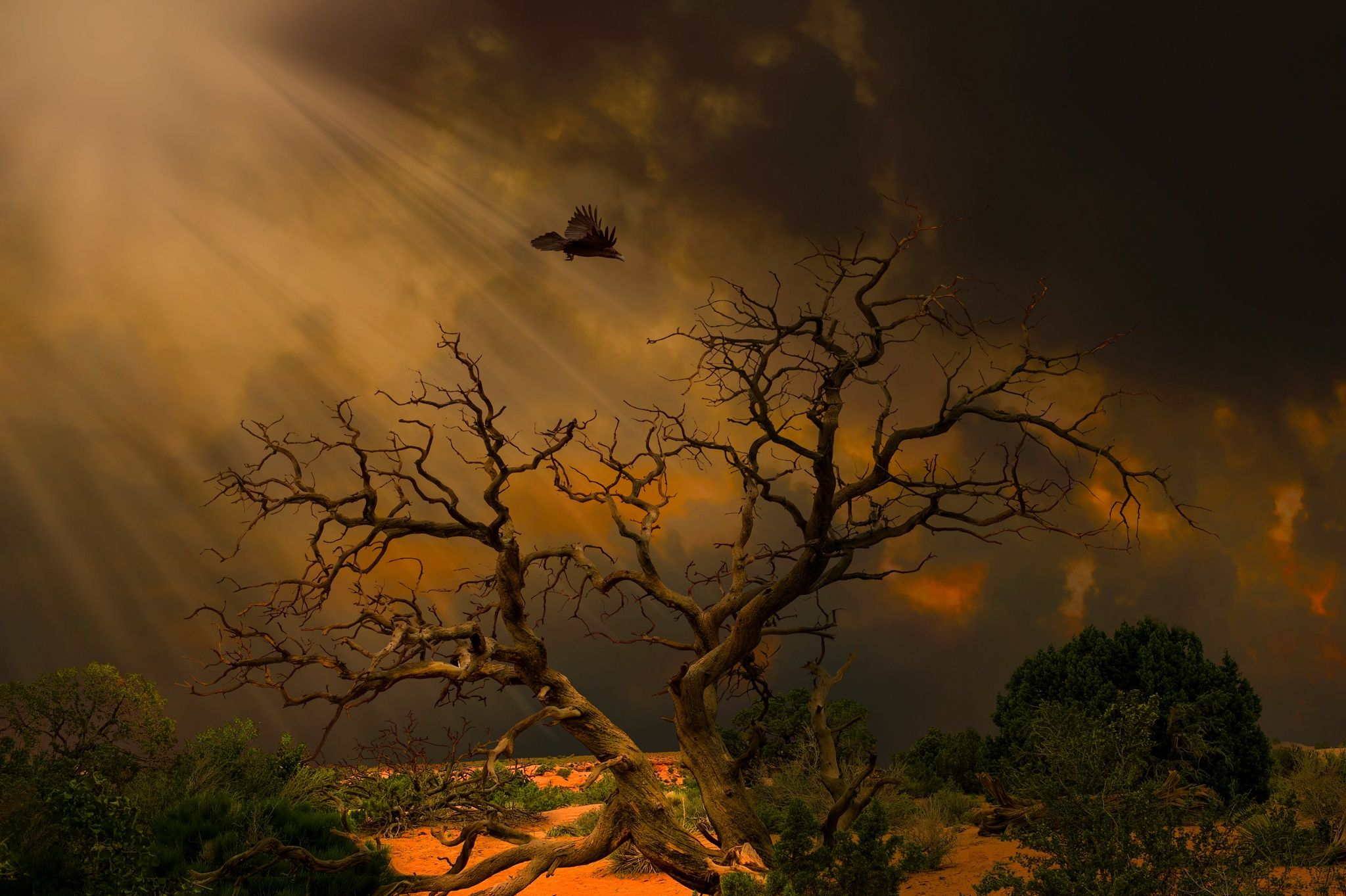 Dead tree at sunset in Arches National Park (With images
