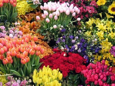 Flores que dizem sem palavras • Jardim de Siguta •