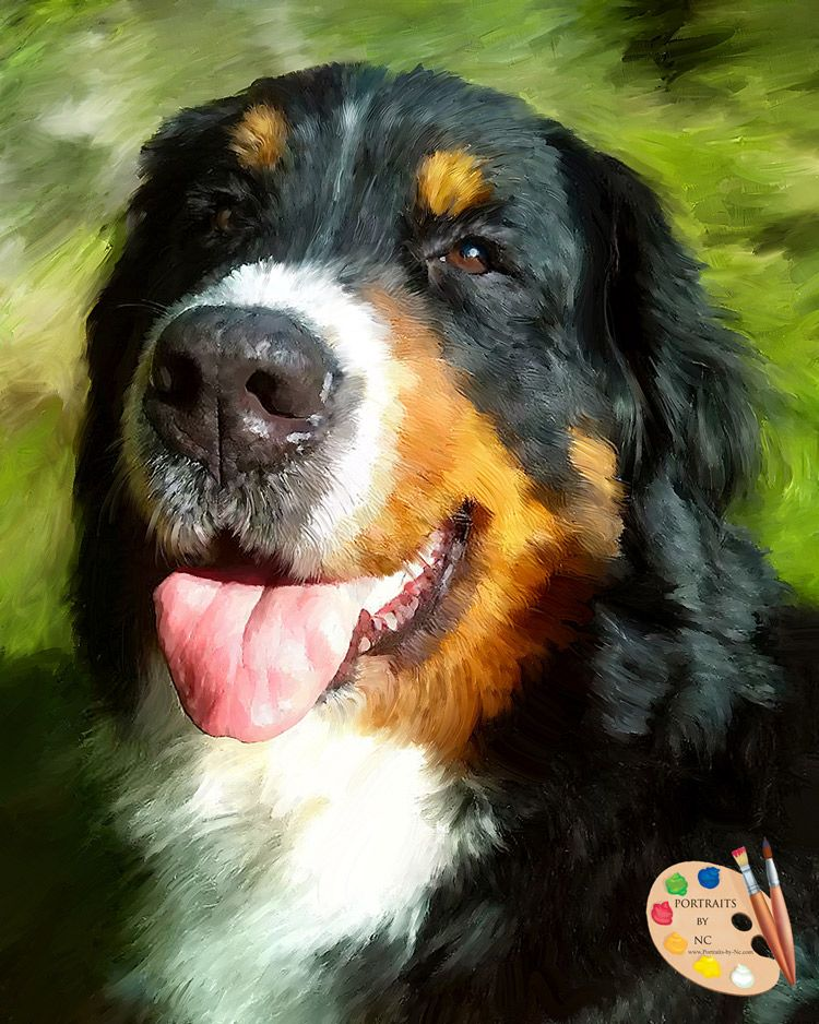Bernese Mountain Dog - Portraits by NC #bernese #bernesemountaindog #pets #pet #petportrait #herdingdogs