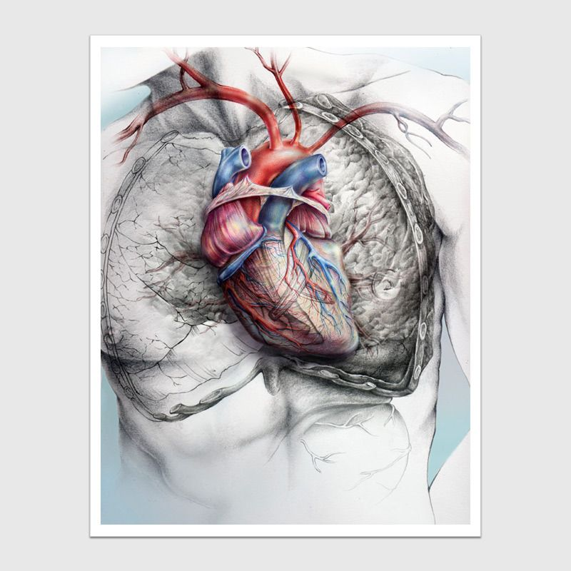 Soy Saludable By Giselle Vitali Idea Pinterest Anatomy