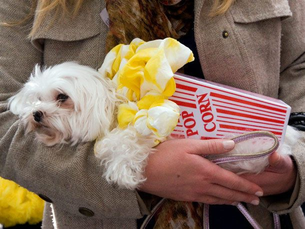 Popcorn Dog Costumes Pet Halloween Costumes Pet Costumes