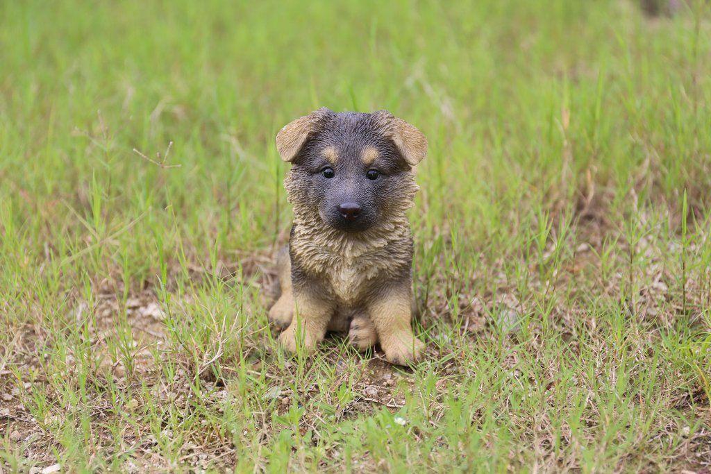 German shepherd puppy german shepherd puppies shepherd
