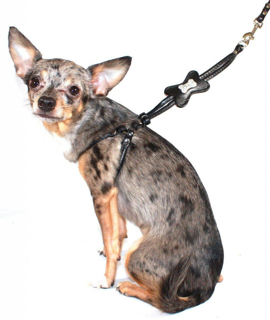 Hip Doggie Blackskull Charm Step-in Harness Xxs