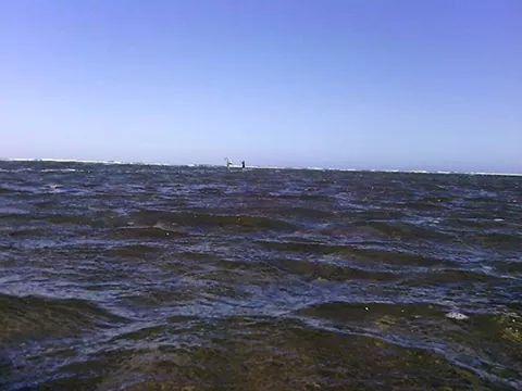 Pescandito pargos