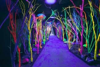 Meow Wolf Art Complex's House of Eternal Return installation opened to the public in mid-March. One hundred and thirty-five artists collaborated to create 70 different spaces.
