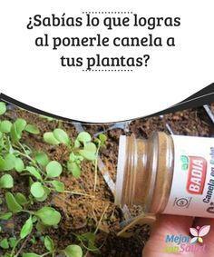 ¿Sabías lo que logras al ponerle canela a tus plantas