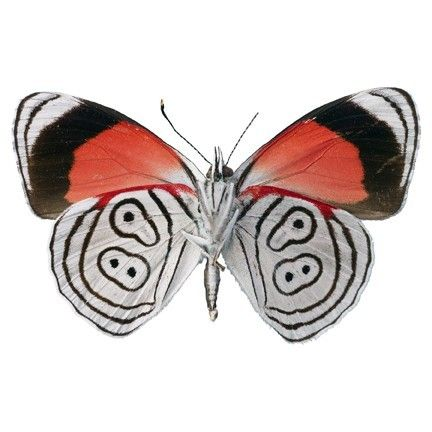 Red White And Black Butterfly Vinyl Decal By WilsonGraphics - Butterfly vinyl decals