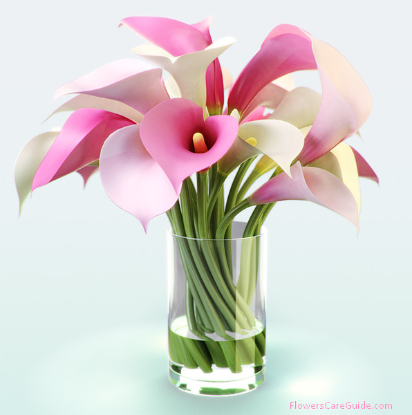 Bouquets of calla lily flower by