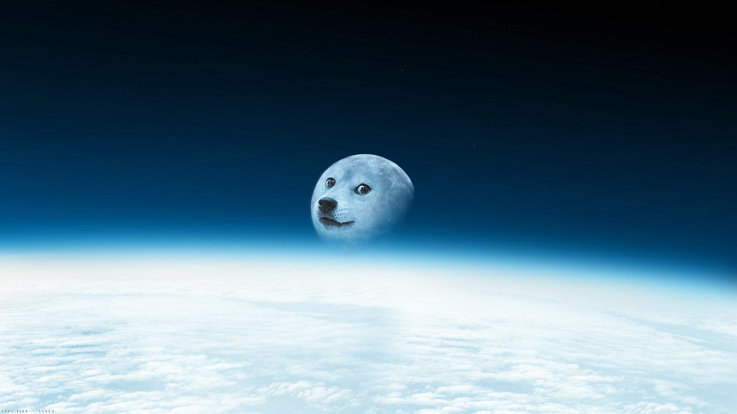 Awesome Doge Live WallpapersDogeDesktop Backgrounds