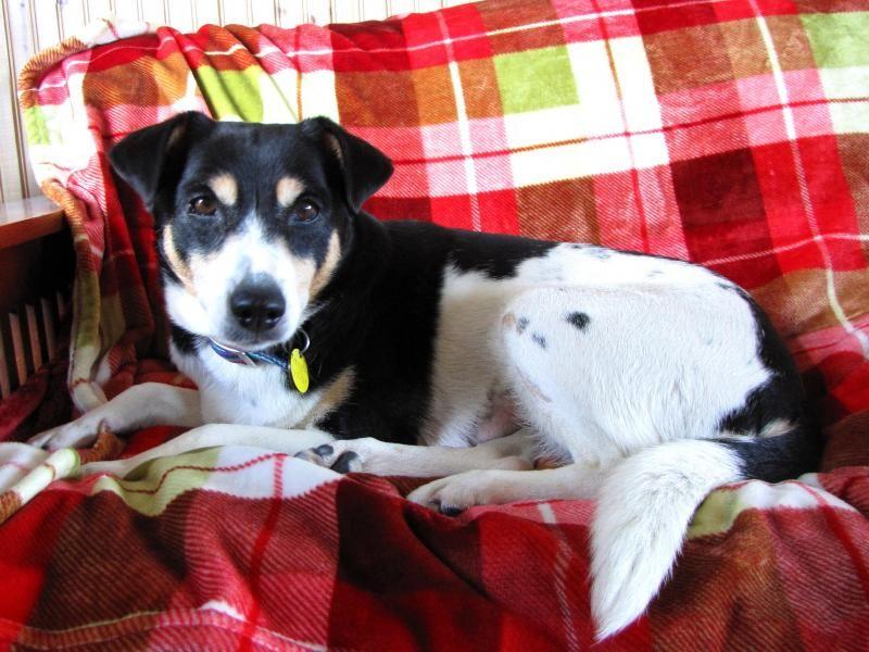 Adopt Maggie on Petfinder Terrier mix dogs, Adoption