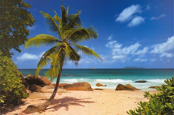 tropical palm beach paradise poster