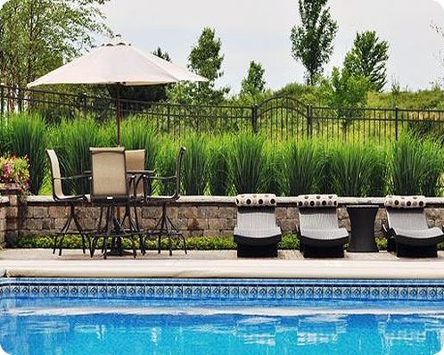hide your alluminum pool fence with pampas grass