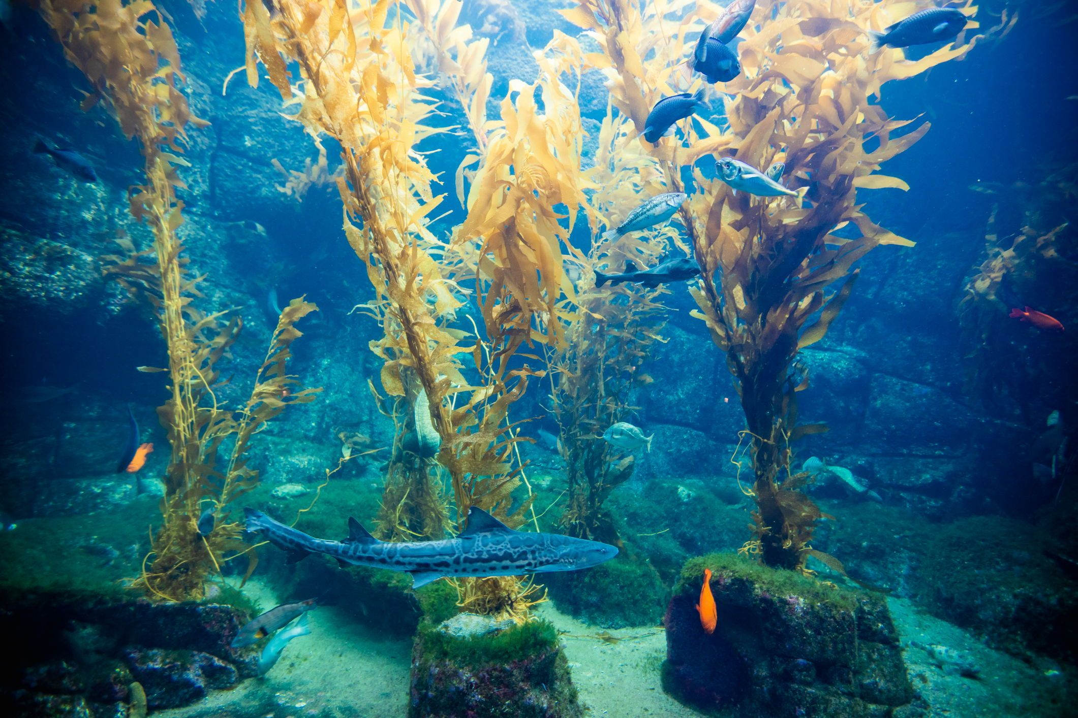 Dive deeper at Birch Aquarium at Scripps and learn all