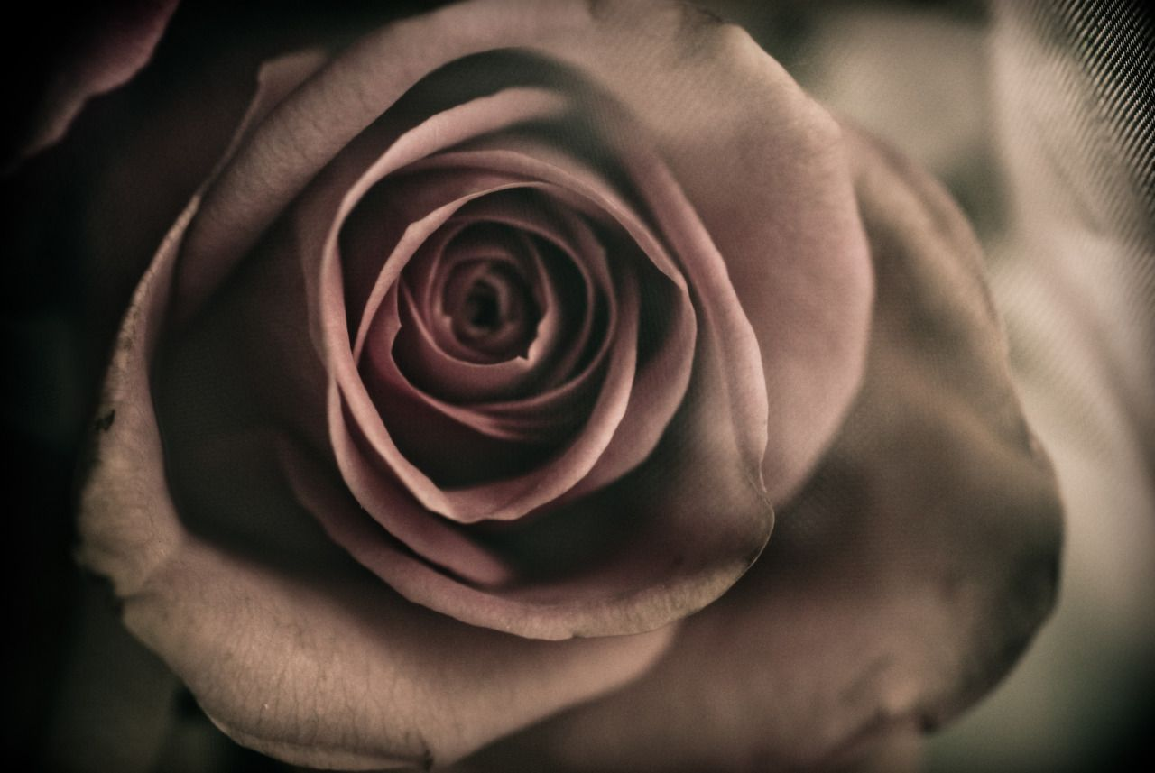 have this color rose in my yard <3