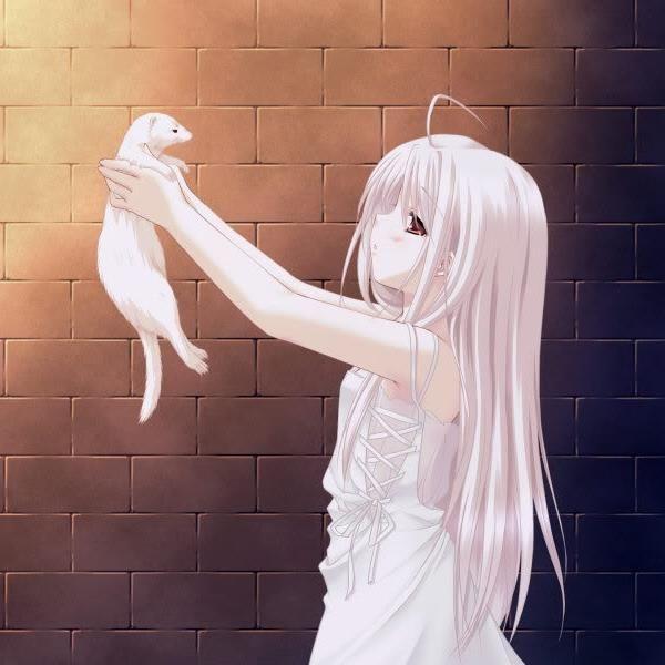 Ferret Anime Anime Anime Animals Neko Girl