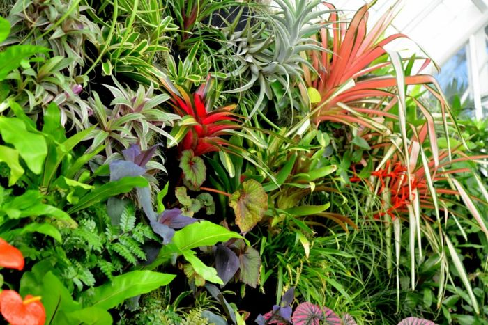 vertikal garten mit rote und blaue exotische pflanzen mit. Black Bedroom Furniture Sets. Home Design Ideas