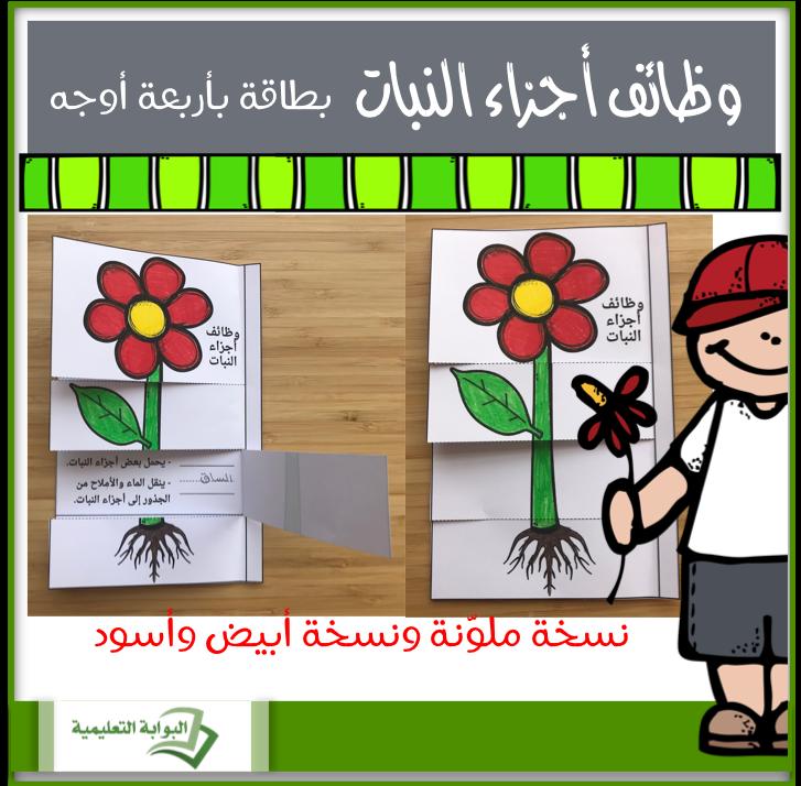 وظائف أجزاء النبات بطاقة بأربعة أوجه Eportal Novelty Sign Decor Home Decor