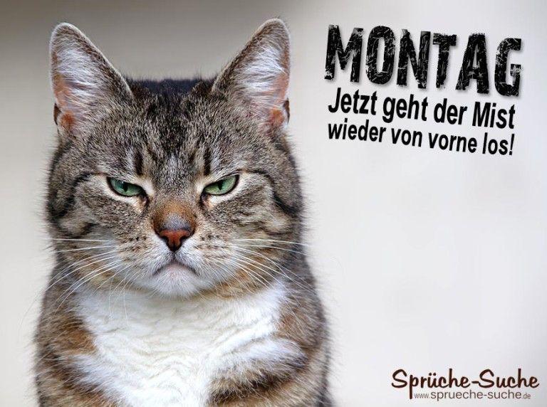 MONTAG - Coole Sprüche mit Bildern