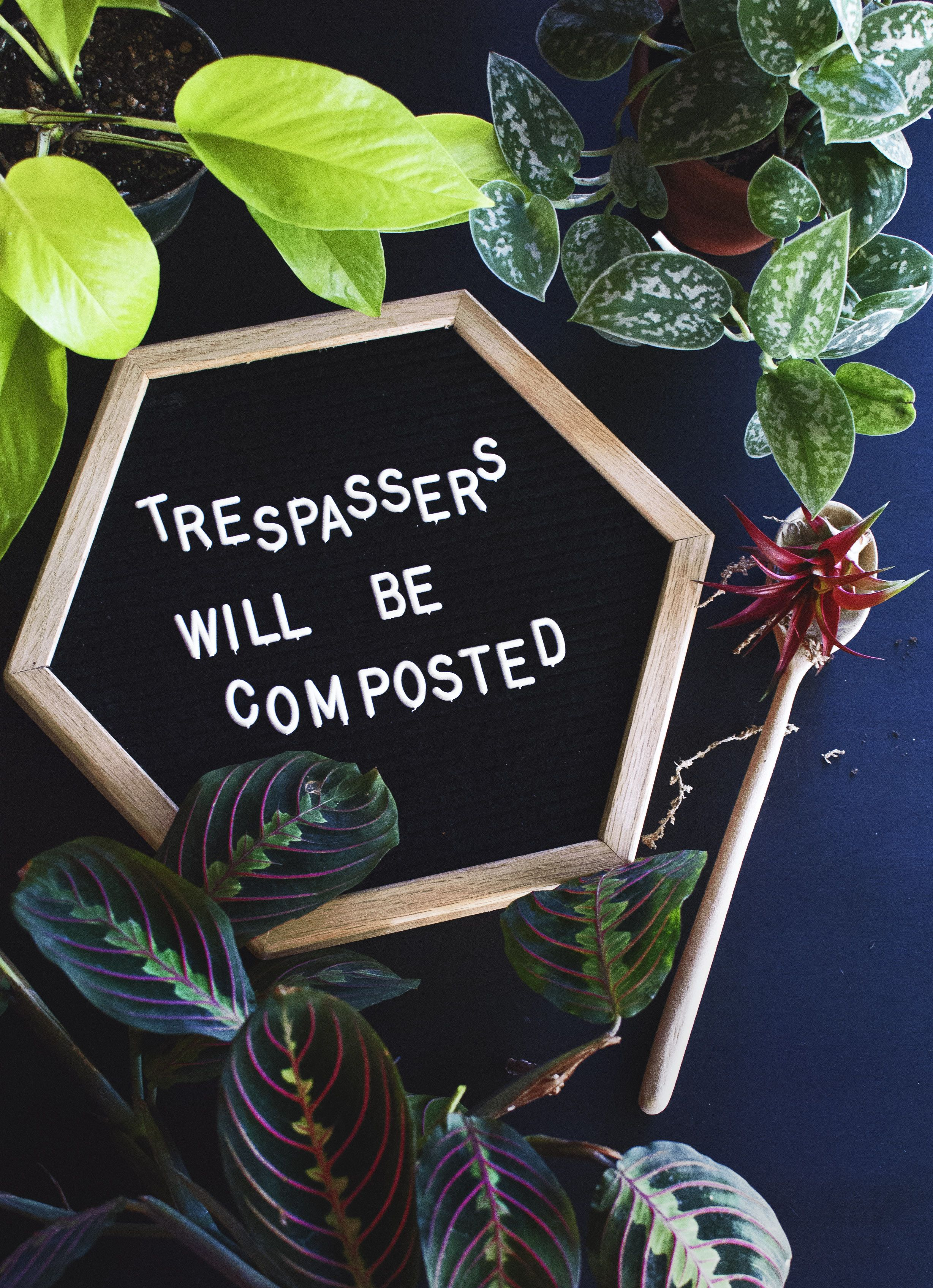 Trespassers Will Be Composted Halloween Letterboard Houseplants Funny Epipremnum Neon