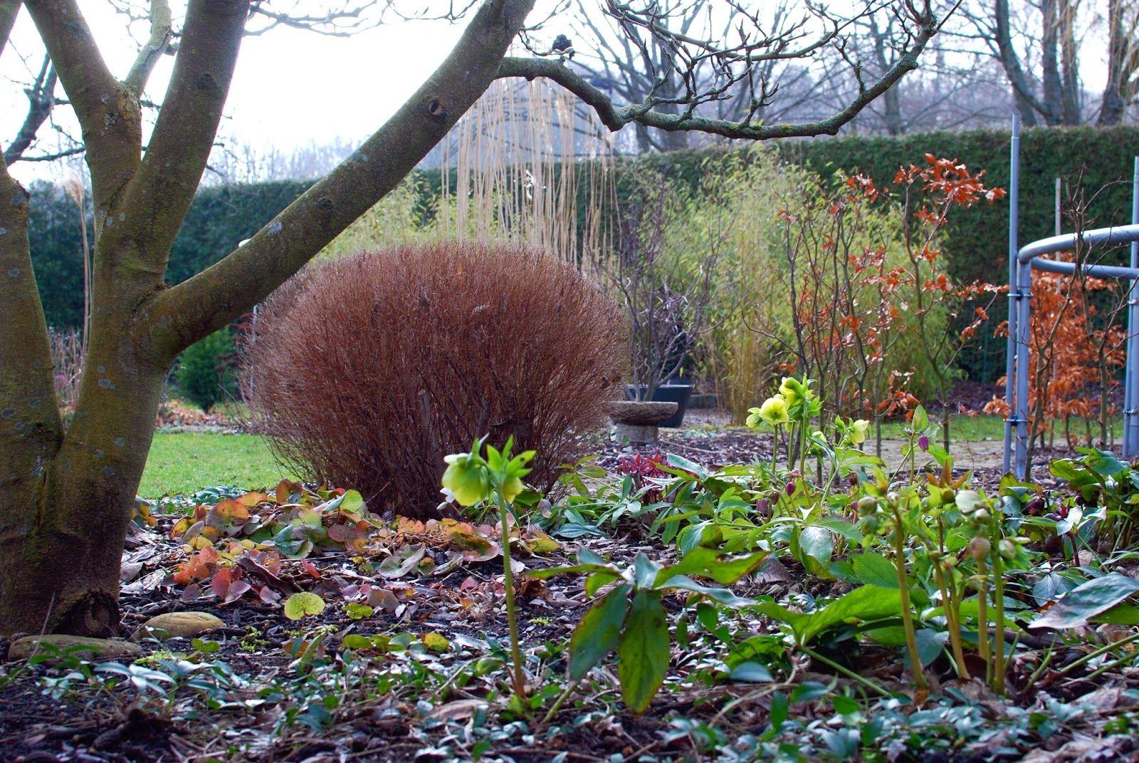 Almbacken Blog Garten Hecke Beete mit Bäumen
