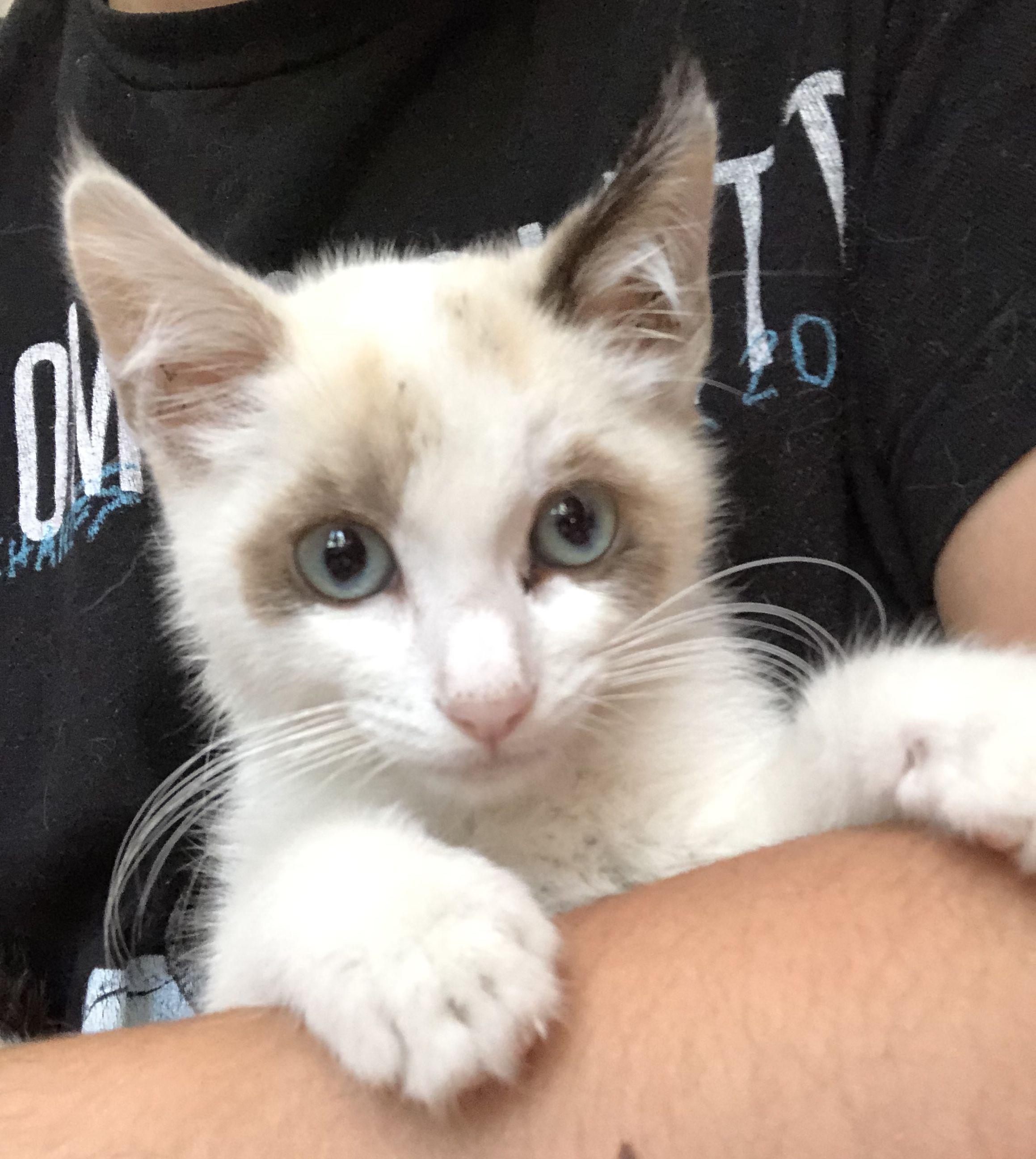 Adopt Freya on Petfinder Cat adoption, Pet adoption