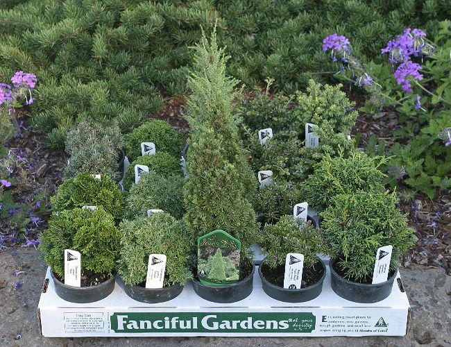 Tiny Trees For Fairy Gardens