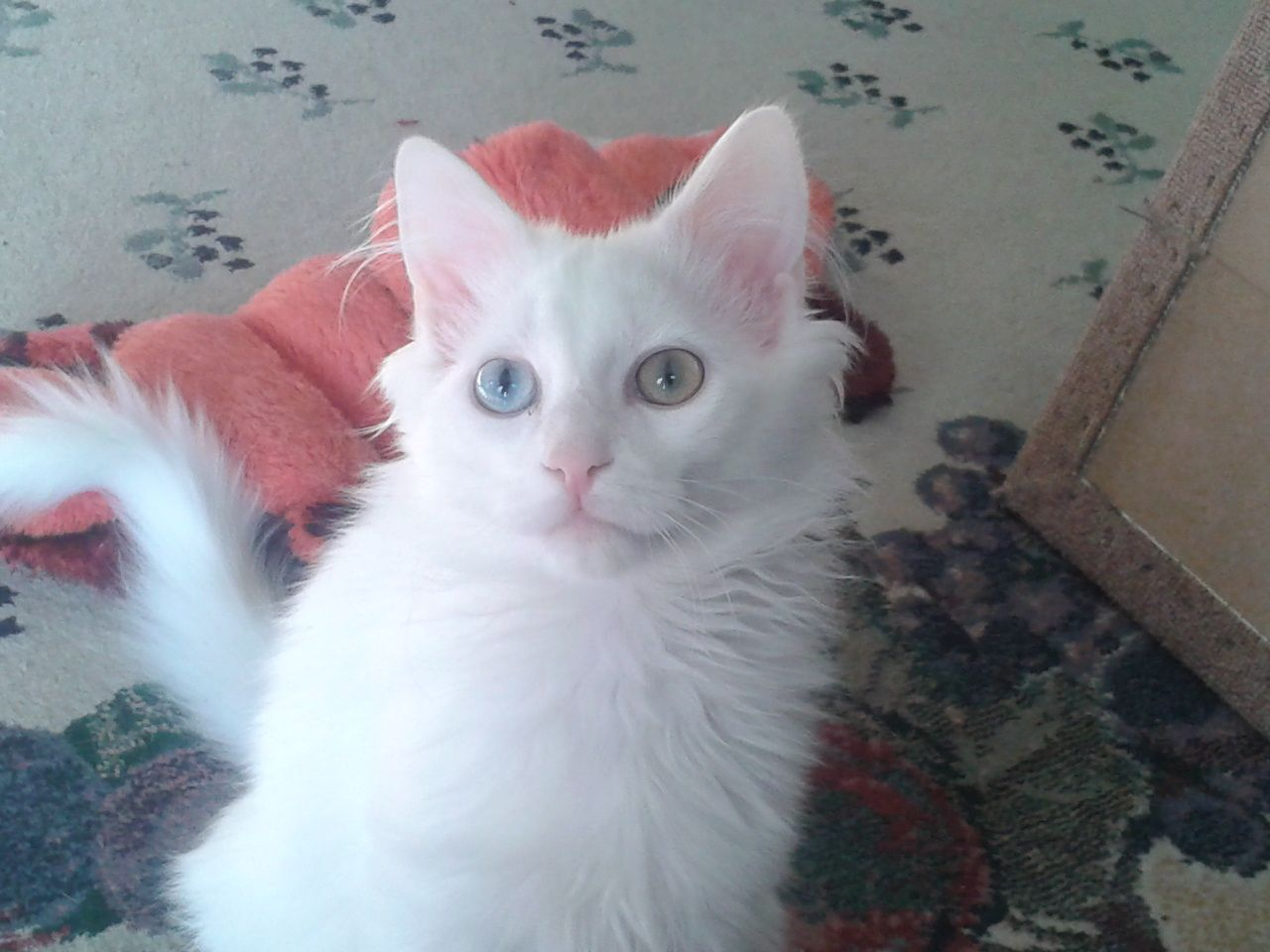 """Sitka"" is our blue & green eyed baby that we found on the"