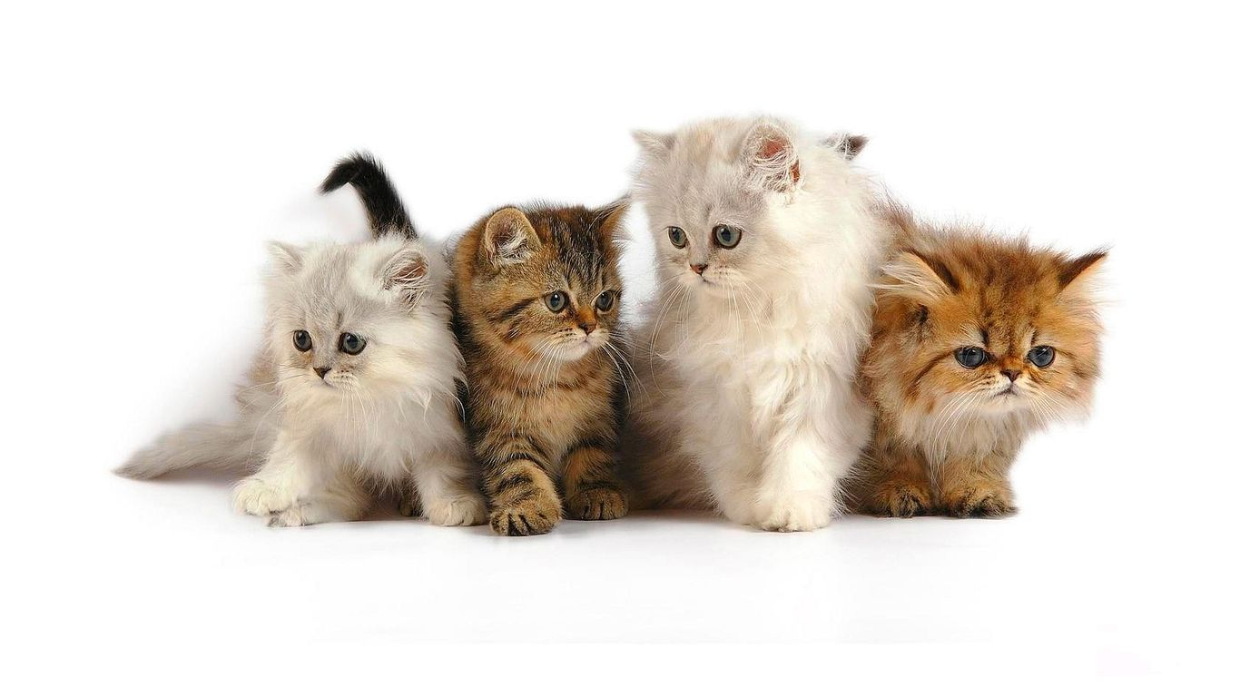 Cute Cat Wallpaper 04 Free 3d Wallpapers Archviz Pinterest