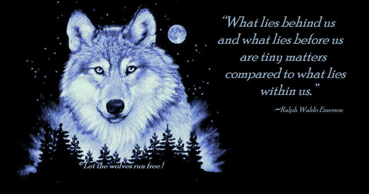 Pin by PRINTTELLA ALPHA MOWASNOW on Wolf quotes Wolf