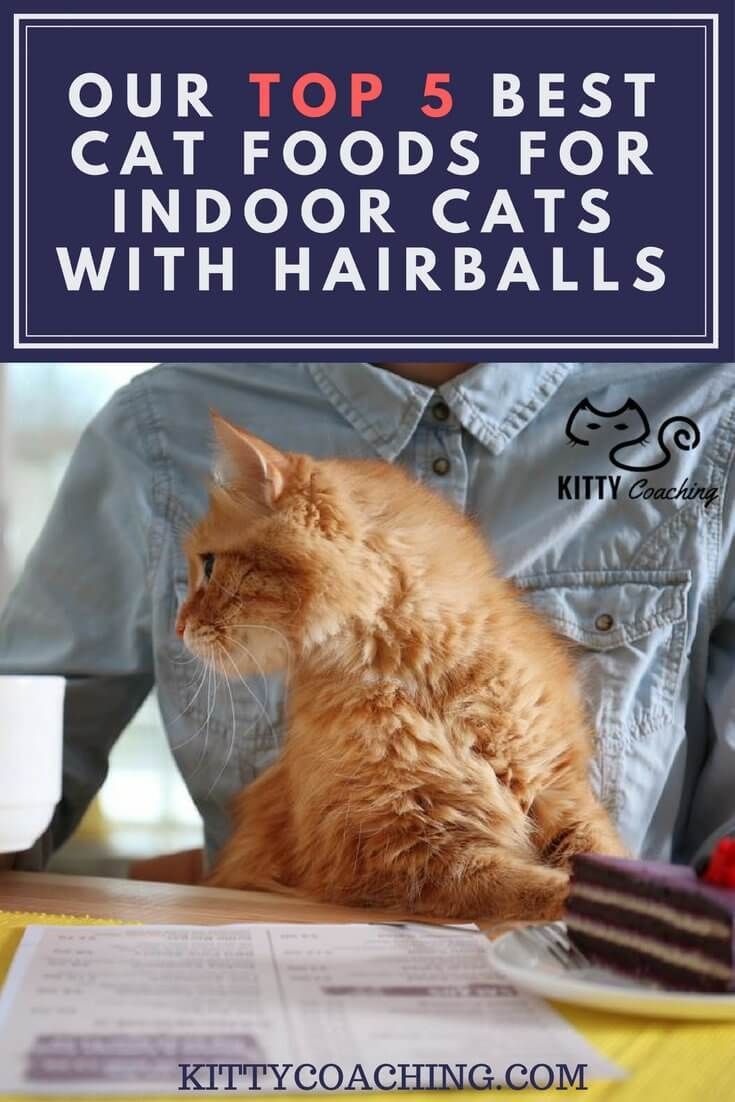 Our Top 5 Best Cat Foods for Indoor Cats with Hairballs