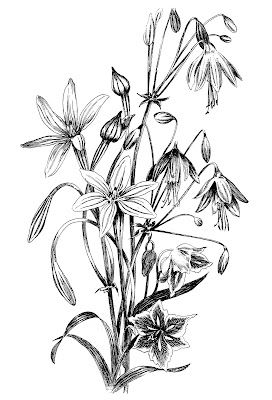 Black and White Floral Drawing   Best Graphics fairy, Graphics and ...