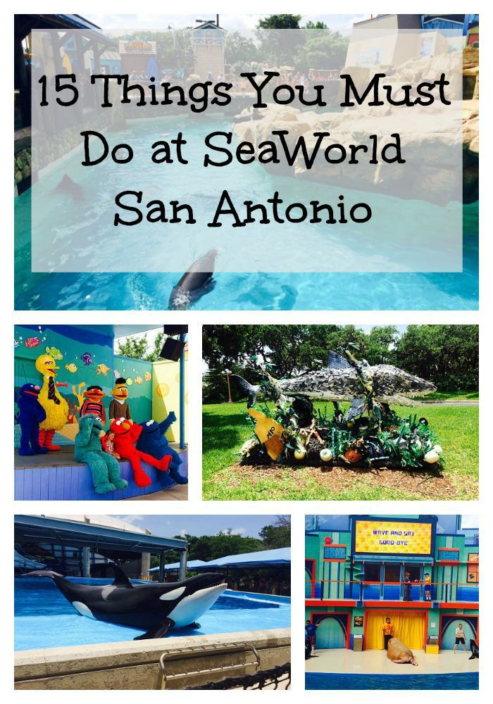 15 Fantastic Things To Do At Seaworld San Antonio San