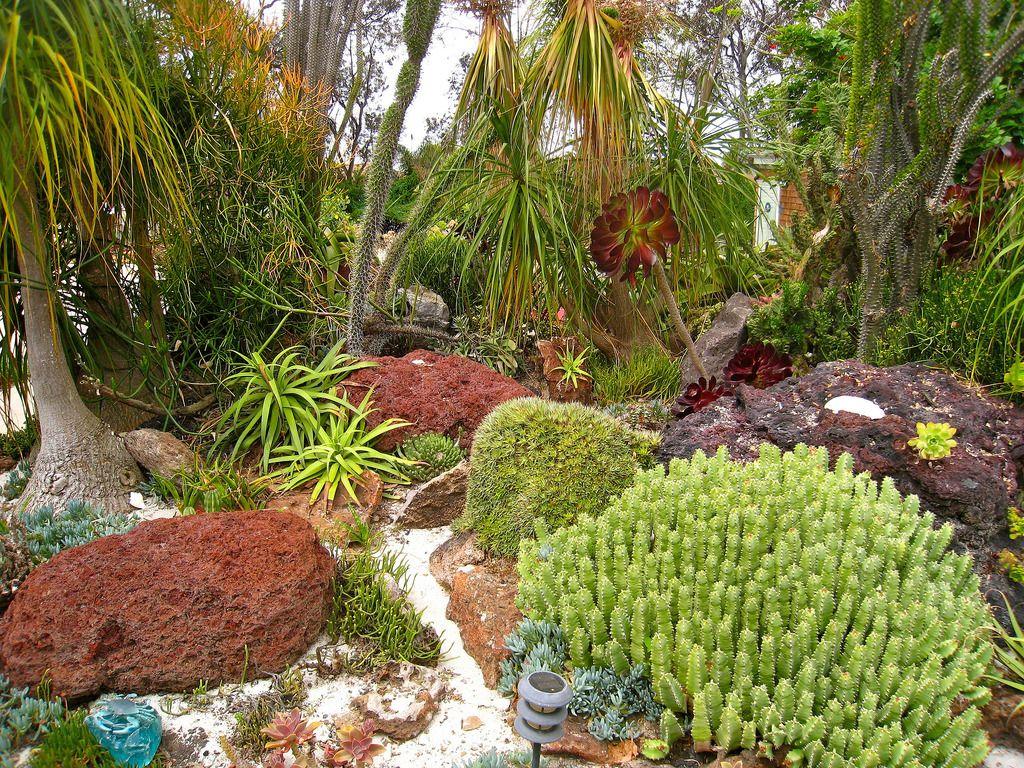 Underwater Succulent Garden | water wise landscape | Pinterest ...
