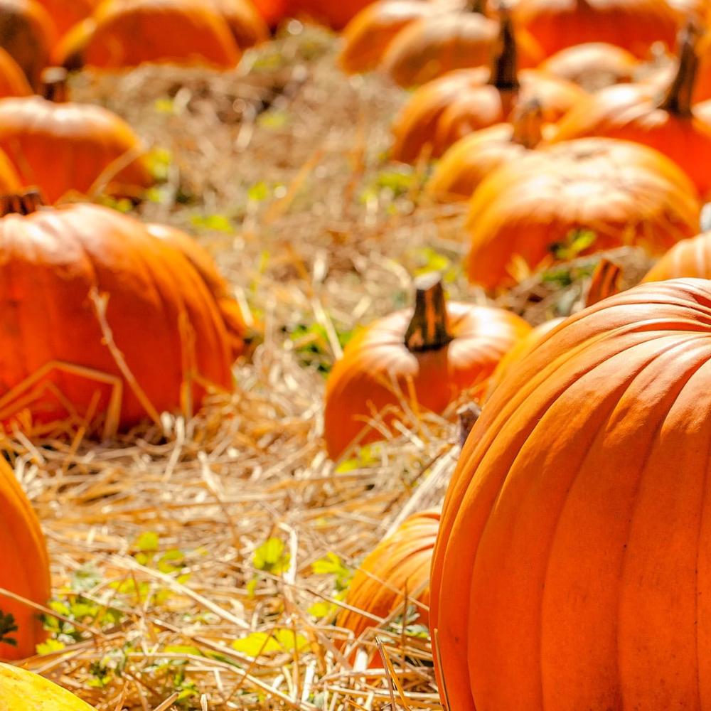 October 26 Is National Pumpkin Day Pumpkin Pumpkin Images Eat