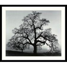 'Oak Tree, Sunset City, California, 1962' by Ansel Adams Framed Photographic Print
