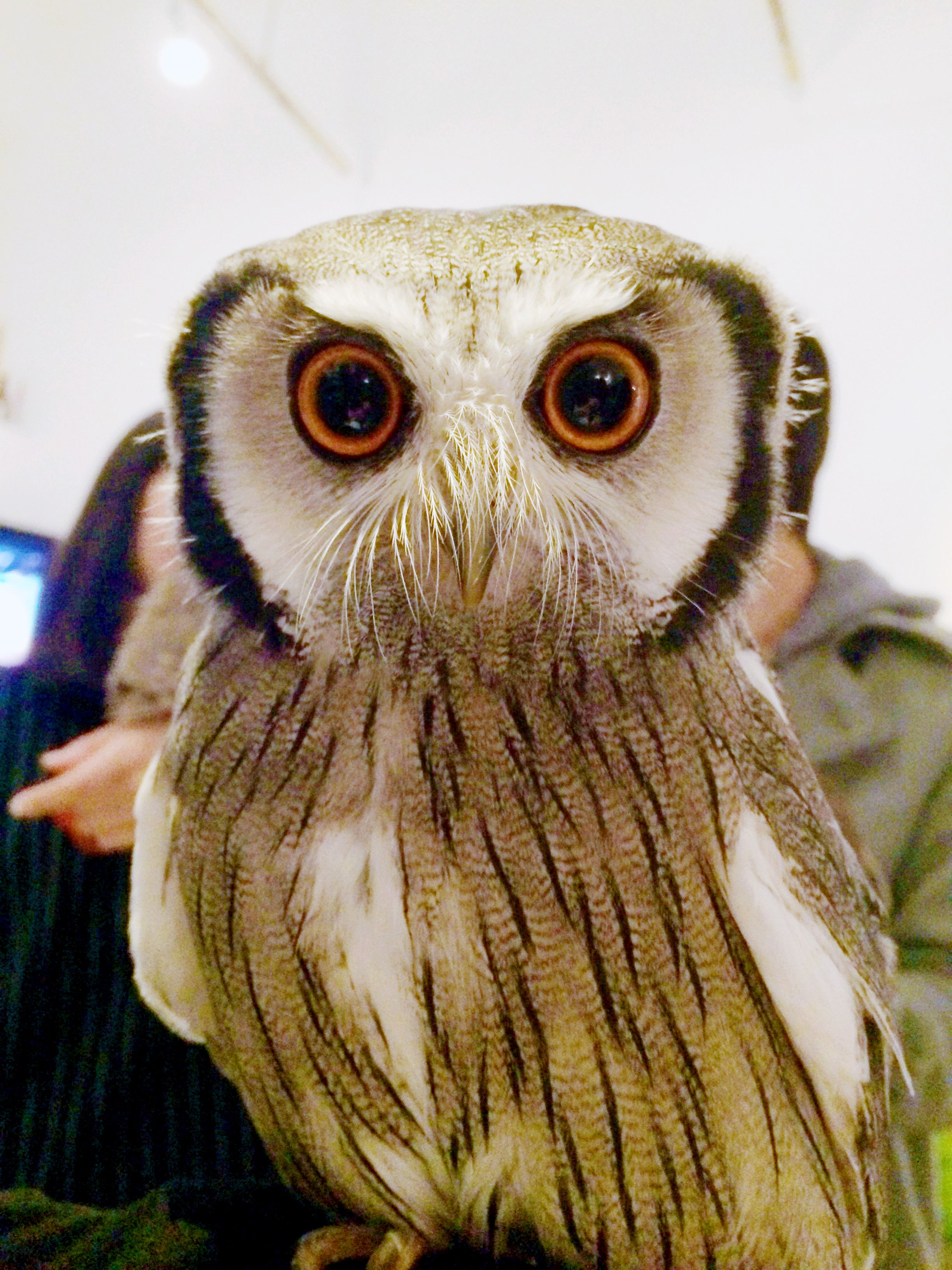 Guys. Guys. GUYS. I went to an owl cafe it was awesome ...