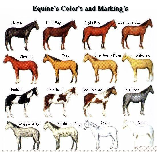 native american war paint on horses - Google Search